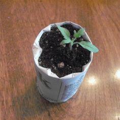 Making paper plant pots