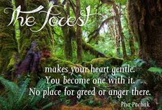 The forest makes your heart gentle.  You become one with it... No place for greed or anger there.  Pha Pachak