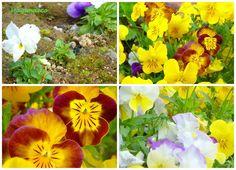 by Giorgia MammaecoFate 4 passi in giardino con me?