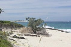 Images of Great Guana Cay, Great Guana Cay - Attraction Pictures - TripAdvisor