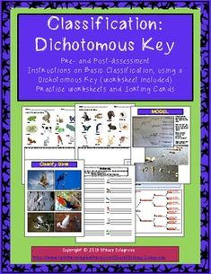 Science Classification Dichotomous Key--Assessments, Worksheets, assessment