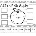 FREE! This cut and paste activity goes great with all your apple themed units....