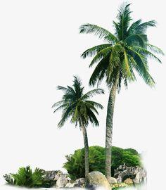 Playa de Palma, Playa De Arena, Palm Tree PNG y PSD