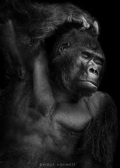 out of my series ANIMALS the b&w version in portrait format…