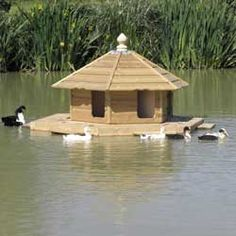The Floating Duck Lodge