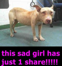 UPDATES ANYONE?? ****URGENT!!! 7/17. TAMMY (A1710120) I am a female tan Pit Bull Terrier mix. The shelter staff think I am about 3 years old and I weigh 39 pounds. I was found as a stray and I may be available for adoption on 07/13/2015. Miami Dade https://www.facebook.com/urgentdogsofmiami/photos/pb.191859757515102.-2207520000.1436414842./1007872372580499/?type=3&theater