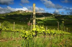 Vineyards, © Salcheto
