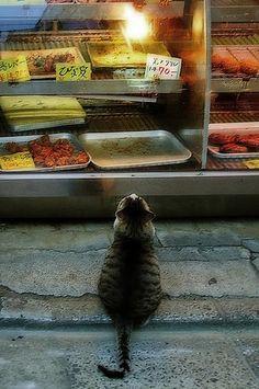 Kitties / Yes, I'd like a tuna filet and some shrimp please