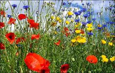 WILDFLOWERS - Google Search