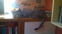 a koty są zawsze na miejscu #cats #catseverywhere