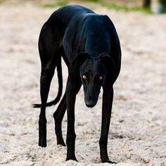 /le petit chien. http://go.jeremy974.neoaid.3.1tpe.net