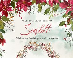 Holly Steams Poinsettia Christmas Watercolor Clipart Red Flowers Scarlett Floral Bouquets Wreaths Digital Floral Berry Wedding Invitation