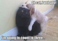 Attack Of The Funny Animals - 20 Pics