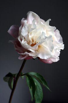 Seasonal flowers: peonies - Cloverhome.nl #flowers #peonies