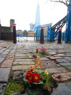 A garden scene in the cracks of the sidewalk.  Very nice. From http://thepotholegardener.com/
