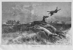 The Hunting  with Greyhounds, vintage etching print 1860. $10.00, via Etsy.