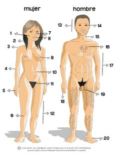 Las partes del cuerpo humano (B1) ~ Actividad online para practicar el vocabulario del cuerpo humano | ProfeDeELE.es