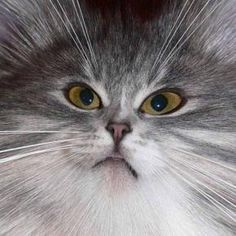Cat Closeup | Very cool photo blog