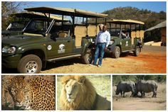 Take a game drive in Pilanesberg National Park  in an open safari vehicle that allows close encounters with lion, leopard, elephant, rhino and buffalo. Book with us at : info@mountziontours.co.za or call 011 492 1740 Close Encounters, 4x4, Buffalo, Safari, Vehicle, Lion, National Parks, Elephant, Game