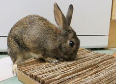 Make your rabbit a cardboard mat perfect for sitting on, digging or shredding.