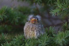 Baby bird   Timberline Trail, Mount Hood, Oregon