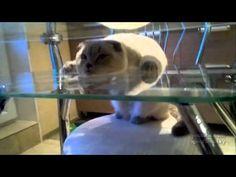 Cat: Just chillin'.  Don't mind me.