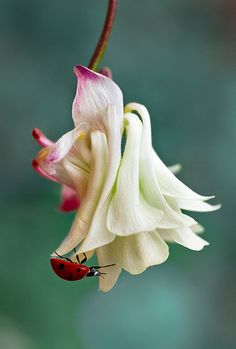 Columbine and a lady.