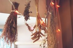 Yulia Volchok. magic. wicca. witchcraft. witchery. pagan. witch. sorcery. stars. new year. tinsel. lights. herbs.