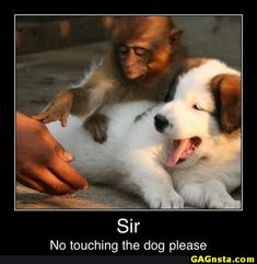 Memes, Jokes, Funny Pictures To Make Your Day. Hilarious Pictures Which Will Tickle Your Funny Bone. Funny Animal Memes, Cute Funny Animals, Funny Animal Pictures, Funny Cute, Funny Dogs, Cute Dogs, Funny Memes, Animal Humor, Funny Photos