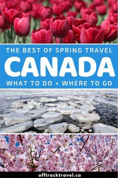 Best Travel Destinations 2019 - Spring travel in Canada is quieter, more affordable and somehow more rewarding. Spring Break Destinations, Top Travel Destinations, Amazing Destinations, Where Is Bora Bora, Visit Canada, Travel Advice, Travel Tips, Travel Ideas, Canada Travel