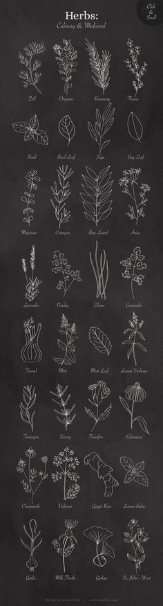 Culinary & Medicinal Herbs List of herbs included in the graphics pack: Dill Oregano Rosemary Thyme Herbs Illustration, Botanical Illustration, Graphic Illustration, Herbs List, Wreath Drawing, Leaf Drawing, Flower Doodles, Medicinal Herbs, Kraut