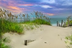 paintings of sea oats | ... Sea Oats photo on canvas | Fine Art Gallery On Canvas offers the best