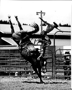 1981 Eddie Bennett off Profit Taker Horse Pictures, Old Pictures, Animal Pictures, Bronco Horse, Rodeo Rider, Rodeo Events, Western Christmas, Rodeo Cowboys, Rodeo Queen