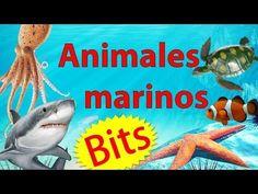 Animales marinos para niños de preescolar   Bits de lectura+Inteligencia bebés/niños (0-7 años) - YouTube Preschool Spanish, Animal Activities, Literacy, Kindergarten, Homeschool, About Me Blog, Youtube, Turtles, Animais