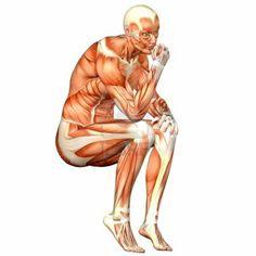 Anatomía: es la ciencia que estudia la estructura del cuerpo.