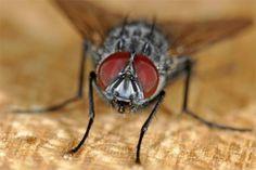 Tien ouderwetse trucs om vliegen te verjagen - Het Nieuwsblad: http://www.nieuwsblad.be/cnt/dmf20130724_00669057