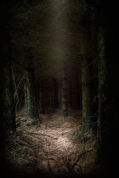 The Dark Place | A very dense and incredibly dark conifer pl… | Flickr
