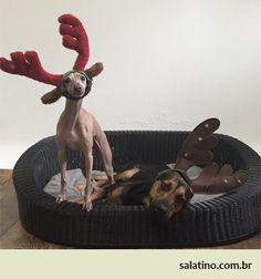 Christmas Spirit at Salatino #dog #salatino #clubesalatino #canil #perro #dogs #cute #love #nature #animales #dog #ilovemydog #ilovemypet #cute #galgos #greyhound #galgoespanhol #galgo