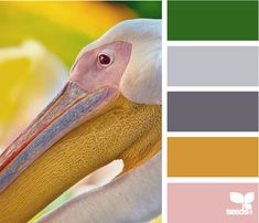 Pelican, color palette for the exterior of the house (with exception to the pink).