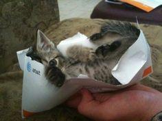 Découvrez des chats qui ont trouvé de très bonnes places pour dormir . Les petits félins étonnent souvent par leur intelligence et leur capacité à s'adapter à leu