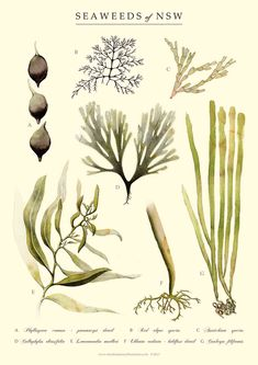 seaweed More