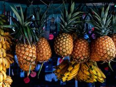 Costa Rica Photos -- National Geographic