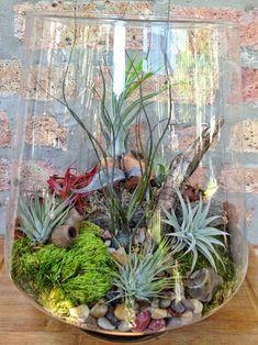 46+ Great Air Plant Terrariums Ideas for Your Stunning Home https://freshouz.com/air-plant-terrariums-46-great-ideas/