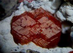 Harmotome, (Ba,Na,K)1-2(Si,Al)8O16•6(H2O), Bentonite mine, Contrada Re, Monte Furlon, Cerealto, Altissimo and Valdagno, Vicenza Province, Veneto, Italy. Fov 5.2 mm. A red twin crystal of 3.5 mm. on smectite. Copyright © Alessandro Tagliaferri
