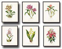 Tropical Orchids Botanical Print Set No. 6, Giclee, Art, Print, Beach Decor, Coastal Art, Tropical Flower Prints, Orchid Prints,Illustration