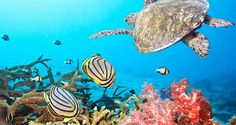 Una planta nuclear contamina un valioso arrecife de coral de Florida | Alerta Catastrofes