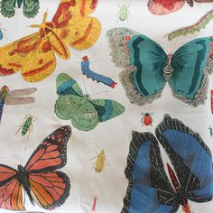 Bugs & Butterfly Cotton