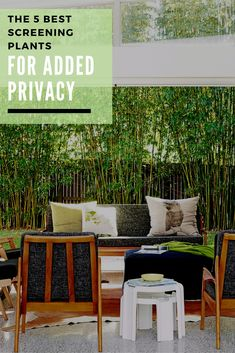 The five best screening plants for privacy