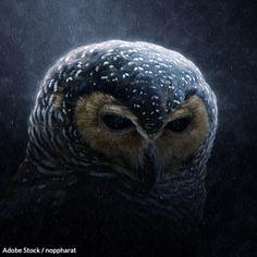 Vegan Animals, Farm Animals, Owl Habitat, Northern Spotted Owl, Animal Rescue Site, Wildlife Conservation, Take Action, Beautiful Birds
