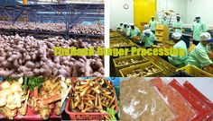 Thailand Ginger Processing | Linda Chen | Pulse | LinkedIn
